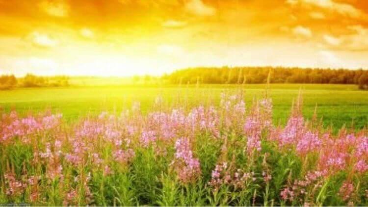 Аномально спекотна погода триватиме в Україні до вихідних